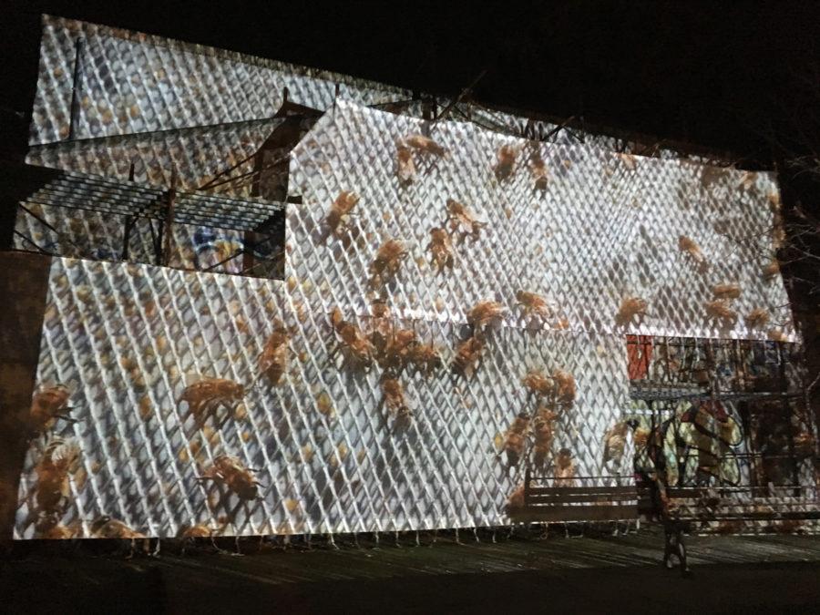 Le api del lago Bullicante Ex Snia (per una scena di Porta Maggiore): Proiezione notturna estranea n. 1; Palazzina della Csoa ExSnia