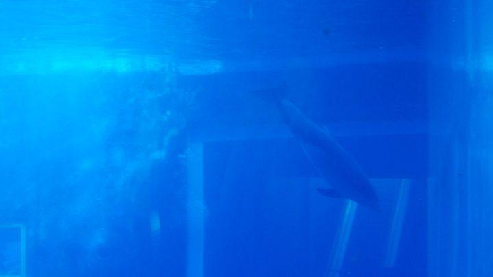Delfini (per una scena di Porta Maggiore), 2019. Video frame. © mgf