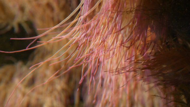 Stella, polipo, anemone, pagliaccio (per una scena di Porta Maggiore), 2019. Video frame. © mgf