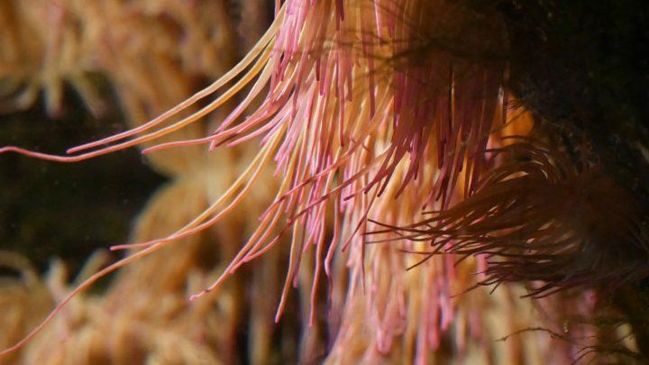 Stella, polipo, anemone e pagliaccio (per una scena di Porta Maggiore)