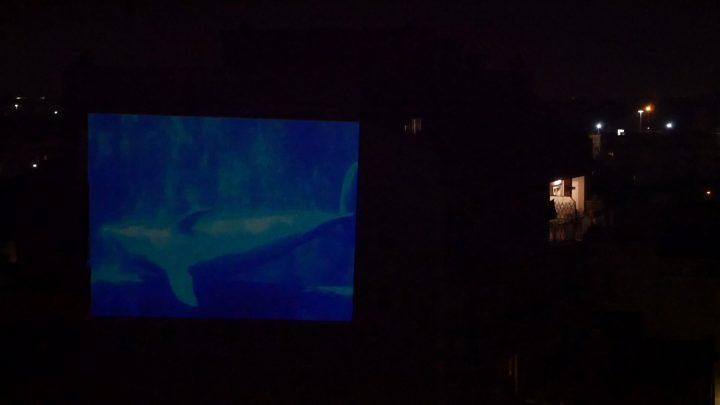 marcogferrari-delfini-scena-porta-maggiore-2019-hdvideo-public-projection-video-frame-personal-work-rome-marcoasilo-home-projections-img-mgf-20200322-vweb-010