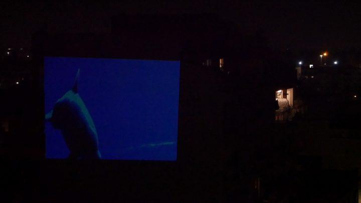 marcogferrari-delfini-scena-porta-maggiore-2019-hdvideo-public-projection-video-frame-personal-work-rome-marcoasilo-home-projections-img-mgf-20200322-vweb-011