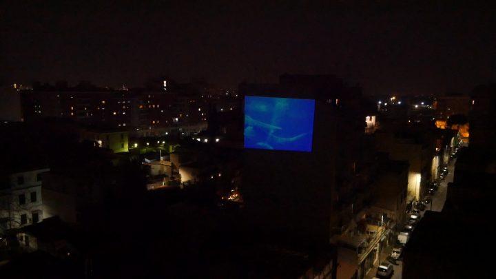 marcogferrari-delfini-scena-porta-maggiore-2019-hdvideo-public-projection-video-frame-personal-work-rome-marcoasilo-home-projections-img-mgf-20200322-vweb-013